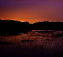Lavender haze of night – Great Meadows series by Owed To Nature