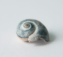 Cobalt blue seashell by SammyPhoto