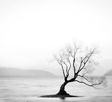 That Wanaka Tree by candysfamily