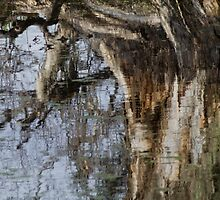 Paperbark Reflection by Su Walker