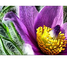 Flower Power Photographic Print
