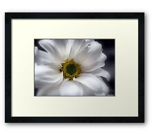 Tears On My Pillow.............Gerbera Framed Print