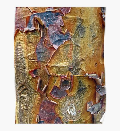 Paper Bark Abstract Poster