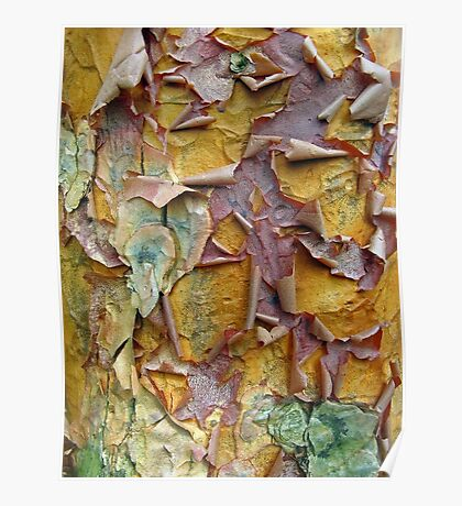 Paper Bark Abstract 2 Poster