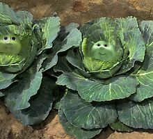 HAVE U EVER WONDERED HOW CABBAGE PATCH DOLLS GREW AND CAME TO BE?  by ✿✿ Bonita ✿✿ ђєℓℓσ