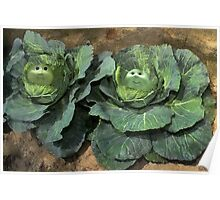 HAVE U EVER WONDERED HOW CABBAGE PATCH DOLLS GREW AND CAME TO BE?  Poster