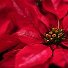 Christmas is in the air..... by Poete100