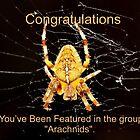 Banner - Arachnids by AnnDixon