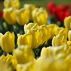 Happy tulip gathering by ShonaI