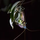 Mating Crickets by Federico Del Monte