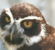 Spectacled Owl by RedHillDigital
