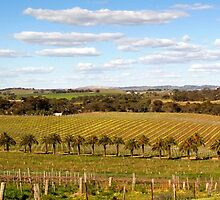 Springtime in the Barossa Valley by John Wallace