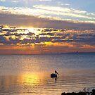 Early Bird by Wayne  Nixon  (W E NIXON PHOTOGRAPHY)