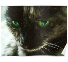 Trilby, What Are You Thinking? - Tortoiseshell Cat Portrait Poster
