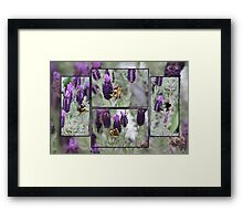 The Attraction of Lavender Framed Print