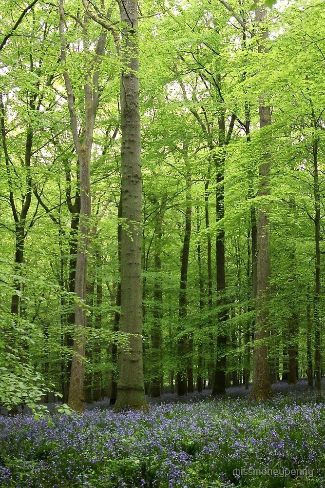 A Walk in Bluebell Wood - image 1 by missmoneypenny