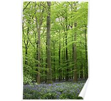 A Walk in Bluebell Wood - image 1 Poster