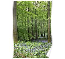 A Walk in Bluebell Wood - image 2 Poster