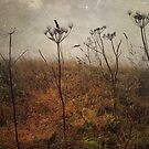 Along the Hedgerows by Sarah Jarrett