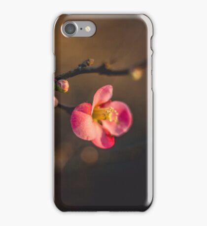 Fire bush in bloom iPhone Case/Skin