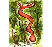 The Snake and the Jungle Photographic Print