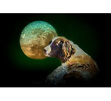 Too tired to howl at the moon Photographic Print