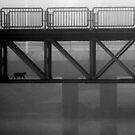 20.9.2014: Cat Crossing Under by Petri Volanen