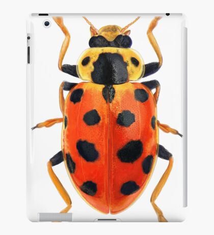 Orange Beetle iPad Case/Skin