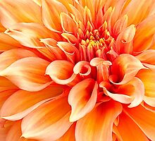 Dahlia in Orange by Marilyn Cornwell