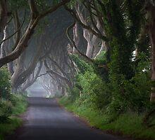 Dark Hedges  Game of Thrones  Co Antrim  Northern Ireland by Zdrojewski