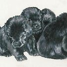 Newfoundland Puppies by BarbBarcikKeith