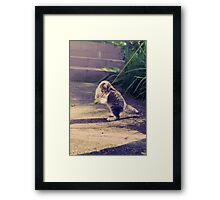 Everyone Loves To Play  Framed Print