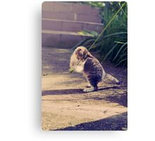 Everyone Loves To Play  Canvas Print