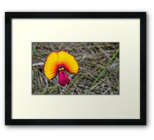 Egg and Bacon Plant Framed Print