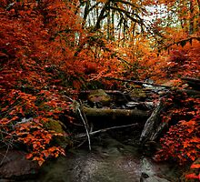 The Fall ~ Oregon Fall Colors ~ by Charles & Patricia   Harkins ~ Picture Oregon