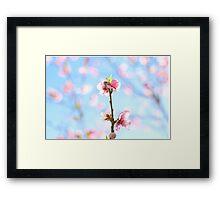 flowering pink peach blossoms Framed Print
