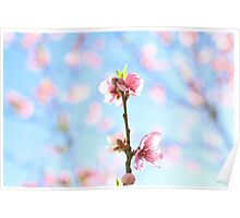 flowering pink peach blossoms Poster