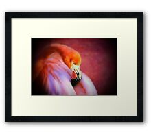 Softly Sleeping Framed Print