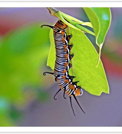 Hungry little Caterpillar Sticker