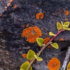 Nature's palette by indiafrank
