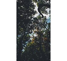 Tree x Sky Photographic Print