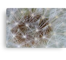 Nature showing off Canvas Print