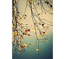 A Poem from Nature Photographic Print