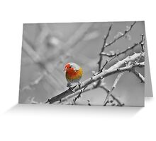 Melba Finch - Selective Coloring - Wildlife Colors of Gold and Red Greeting Card