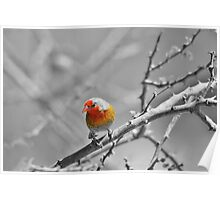 Melba Finch - Selective Coloring - Wildlife Colors of Gold and Red Poster