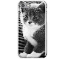 Kitten IV iPhone Case/Skin