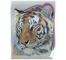 Sumatran Tiger Endangered Species Poster