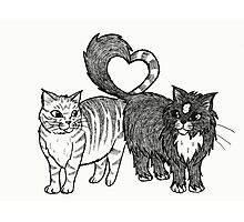 Cats in Love Photographic Print