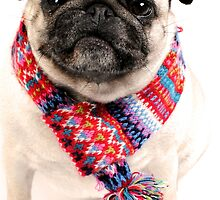 I AM PUG..... in scarf... by NJMphotography
