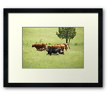 Cowgirls Framed Print